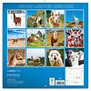 Llamas Kalender 2020