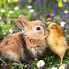 Animal Cuties Kalender 2020