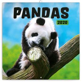 Presco Pandabären - Pandas Kalender 2020