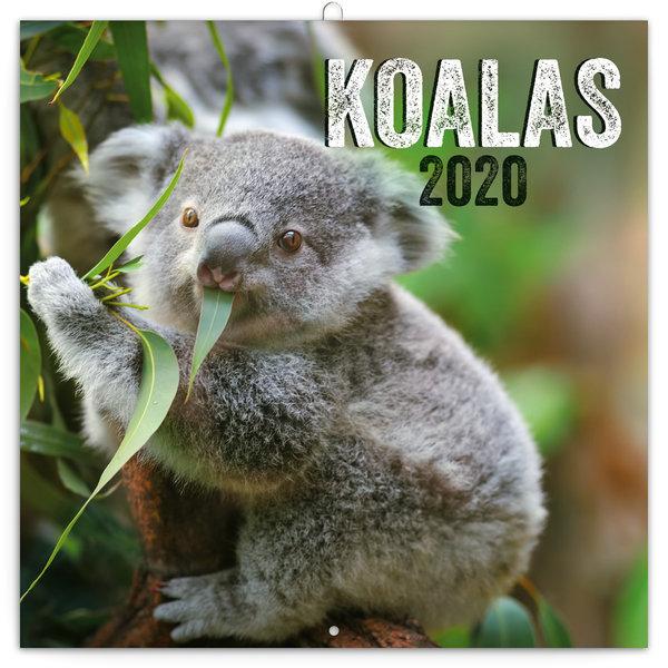 Presco Koala's - Buidelbeer Kalender 2020