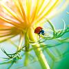 Marienkäfer - Ladybugs Kalender 2020