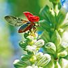 Lieveheersbeestje - Ladybugs Kalender 2020