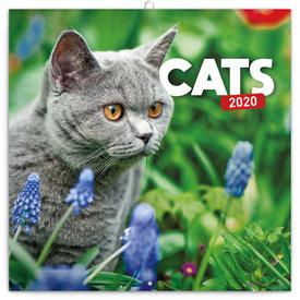 Presco Katzen - Cats Kalender 2020