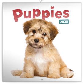 Presco Welpen - Puppies Kalender 2020
