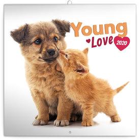 Presco Young Love - Kätzchen & Welpen Kalender 2020