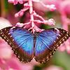 Schmetterlinge - Butterflies Kalender 2020