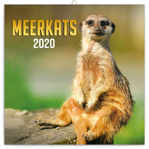 Presco Erdmännchen - Meerkats Kalender 2020