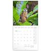 Erdmännchen - Meerkats Kalender 2020