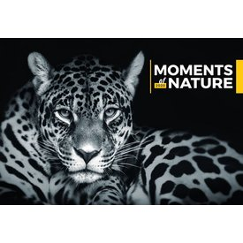 Presco Moments of Nature 48x33 Kalender 2020