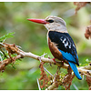 Vogels - Birds  30x34 Kalender 2020