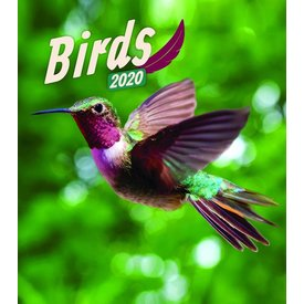 Presco Vögel - Birds 30x34 Kalender 2020