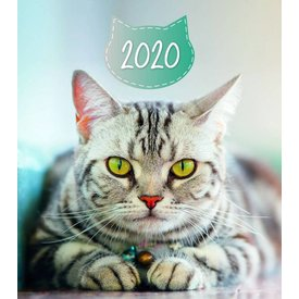 Presco Katten - Cats 30x34 Kalender 2020