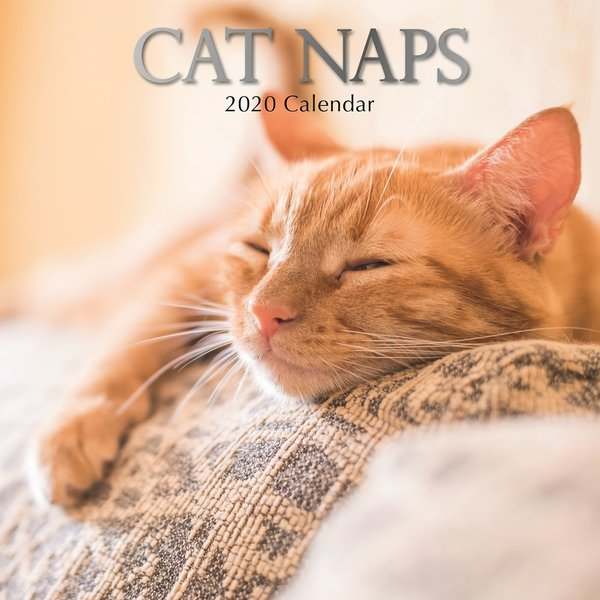 The Gifted Stationery Katzen - Cat Naps Kalender 2020
