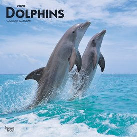 Browntrout Dolfijnen Kalender 2020