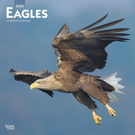 Browntrout Adler - Eagles Kalender 2020