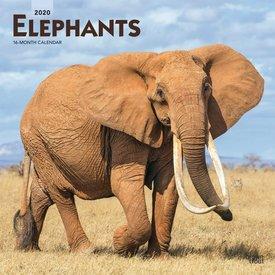 Browntrout Elefanten Kalender 2020