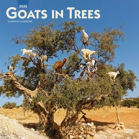 Browntrout Goats in Trees Kalender 2020