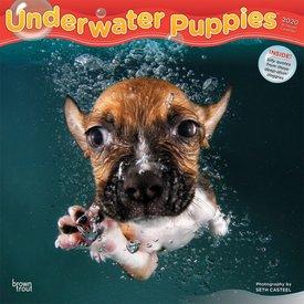 Browntrout Underwater Puppies Kalender 2020