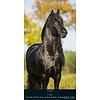 Paarden - Beautiful Horses Slimline Posterkalender 2020