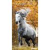 Wild und Schön - Slim Pferdekalender 2020