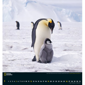 teNeues Wildlife 45x48 NG Kalender 2020