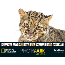 teNeues Photo Ark NG Posterkalender 2020