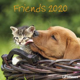teNeues Kätzchen & Welpen - Freunde Kalender 2020