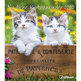 teNeues Kittens - Cute Cats Kalender 2020