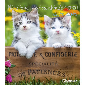 teNeues Niedliche Katzenkinder Kalender 2020