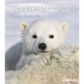 teNeues Tierkinder Kalender 2020