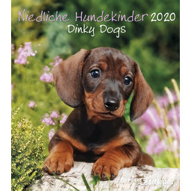 teNeues Puppies - Dinky Dogs Kalender 2020