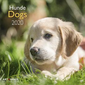teNeues Honden - Dogs Kalender 2020