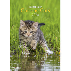teNeues Curious Cats A3 Kalender 2020