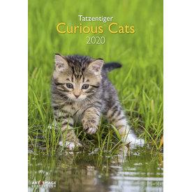 teNeues Katzen - Tatzentiger A3 Kalender 2020