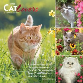Browntrout Cat Lovers Kalender 2020