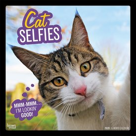 Browntrout Cat Selfies Kalender 2020