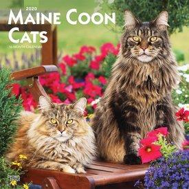 Browntrout Hundekatzen - Maine Coon Katzen Kalender 2020