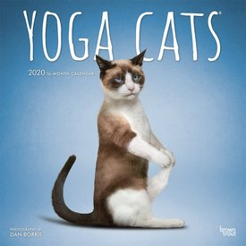 Browntrout Yoga Cats - Joga Katzen Kalender 2020