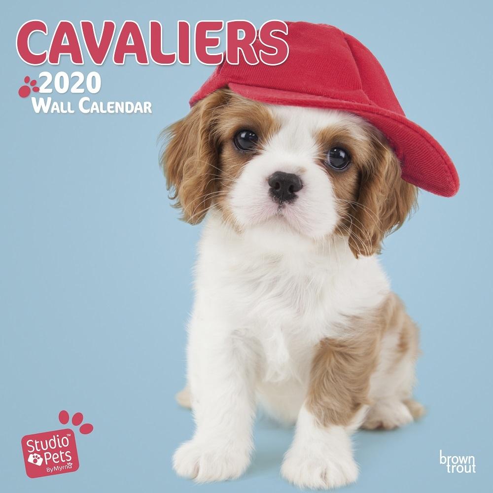 734ba64ce2 Studio Pets By Myrna Cavalier King Charles Spaniel Studio Pets Kalender 2020