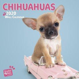 Studio Pets By Myrna Chihuahua Kalender 2020