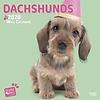 Dackel Studio Pets Kalender 2020