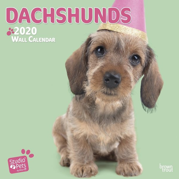 Studio Pets By Myrna Dackel Studio Pets Kalender 2020