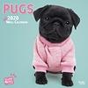 Mops Studio Pets Kalender 2020