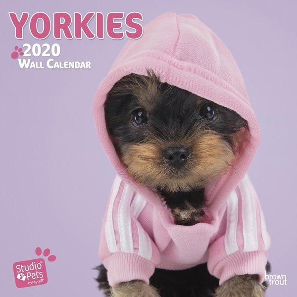Studio Pets By Myrna Yorshire Terrier Studio Pets Kalender 2020