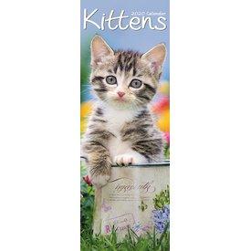 Avonside Kätzchen Slimline Kalender 2020