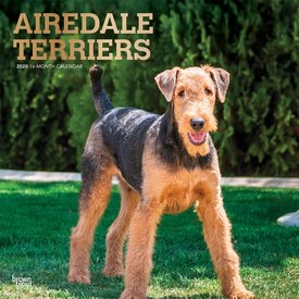 Browntrout Airedale Terrier Kalender 2020