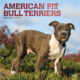 Browntrout American Pit Bull Terrier Kalender 2020