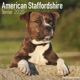 Avonside American Staffordshire Terrier Kalender 2020
