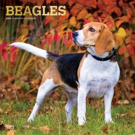Browntrout Beagles Kalender 2020