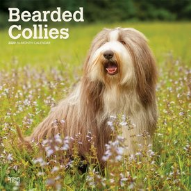 Browntrout Bearded Collie Kalender 2020